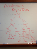 Dichotomous_key