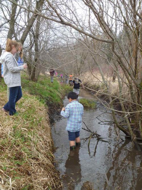 Creek study - 21